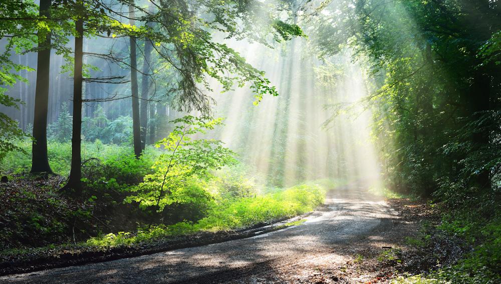 Wald- und Forstflächen